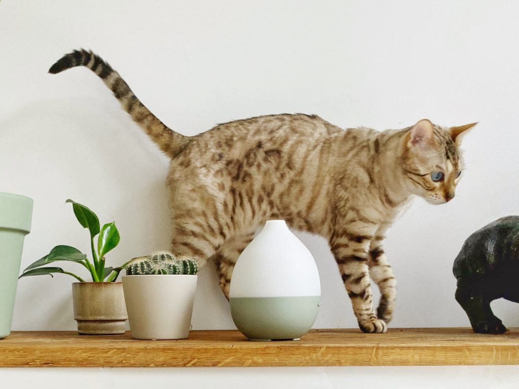 cat on shelve with aroma diffuser