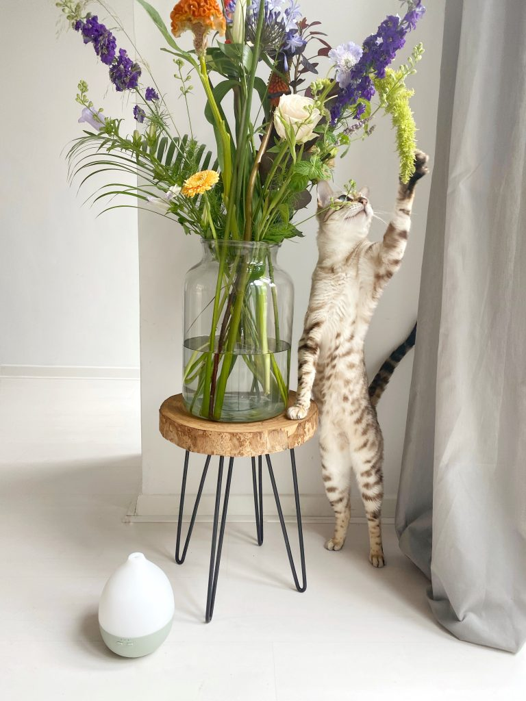 Cat playing with bouquet on small table