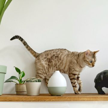 Cat walking on shelf