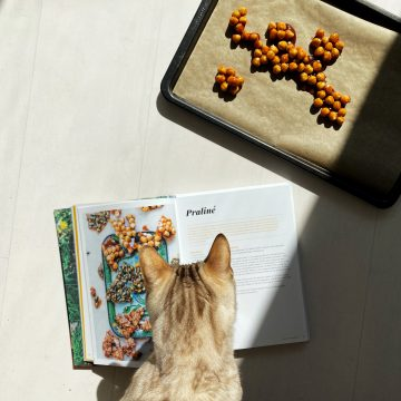 cat reading cookbook