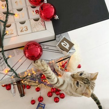 cat climbing tower of advent calendars