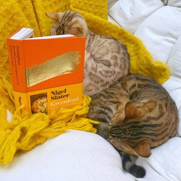 Cats reading a cook book